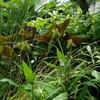 夏が好きな植物たち