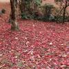 岐阜県百年公園 紅葉が綺麗でした(*^.^*)