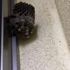 浜松市でサンルーム横にできた蜂の巣を駆除してきました!