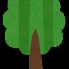 しゃかちゃん語録「木がいっぱい・・・」