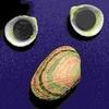 貝殻マグネットを作ろう