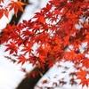 大原野神社の紅葉2020。ライトアップもあり。