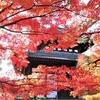 東福寺の紅葉②観光25R...過去20161118