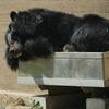 円山動物園の動物たち2018春(好きな動物だけ)