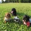 初心者でも飼いやすい犬種ランキング!犬の特徴もご紹介