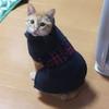 ココちゃんが朝起きたら再びおヌードに!!今回は新作の服で華麗に変身~♪(349日目)