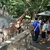 カオキアオ動物園(オープンズー)