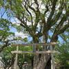 宗像・知る人ぞ知る神社に冒険!! ⑤~シリーズ完結!!宗像に隠されてる神さまたちを、八所宮周辺からも発見?!の、巻~