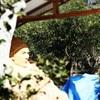 砂の彫刻「慎太郎砂像」展示中