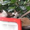 ネコを下から見た