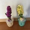 2-337   愛すべき花たち〜良い匂いがします〜