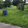 草刈の時間を変更してみた・暑くて猫転がる