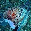サンゴの保全