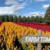 【ファーム富田】〜北海道・中富良野町〜富良野に行ったら必ず行きたい!9月に見れる花畑を紹介♪