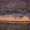 一足早くひっそりと、秋の紅葉 赤城山覚満淵へ行きたい
