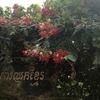カンボジア旅行記~ハス池のカフェ~