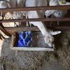 商品開発の難しさ:酪農関連の飼料や添加剤の場合
