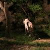 いしかわ動物園のナイトズーに行ったらホワイトタイガーはサービス精神旺盛だった