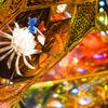 【目黒】ホテル雅叙園東京「和のあかり×百段階段 2018」を単焦点レンズSEL55F18Zで撮ってきた【2018.7.21】