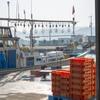 2018年7月20日 小浜漁港 お魚情報