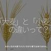 329食目「『大麦』と『小麦』の違いって?」大きい方が大麦で小さい方が小麦ではありません。