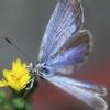 けがの功名で撮れた美しい羽