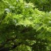 心を潤す新緑
