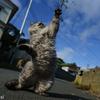 猫拳の撮り方とカメラの設定方法in田代島
