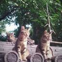 「湊川神社の守り猫」ぬっこくんの日常 17