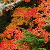 秋雨の奥日光②竜頭の滝