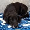根室保健所の保護犬は飼い主さんが決まりました