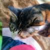 【愛猫日記】毎日アンヌさん#165