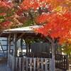 【ブログ】秋の景色。