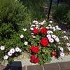 団地の花壇