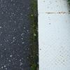 住宅街道路脇の蘚類と地衣類の混生