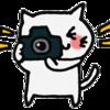 フィルムカメラが人気らしい