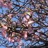 しらこ桜を諦めて ショートツーリングとリバーサイド