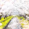 川越市・新河岸川の桜を撮ってきた!