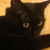 今日の黒猫モモさんの動画ー485