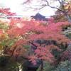 東福寺へ紅葉を見に行く(京都)…過去20161118
