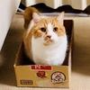 【愛猫家のレビュー】オンライン番組「おうちとつなぐ保護犬・保護猫の未来」を視聴しました。