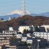 裸木や遙かに富士の綿帽子