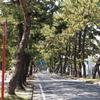 池鯉鮒の東海道松並木で松ぼっくりを拾いまくる