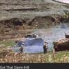 1945年 5月16日 『沢山のブリキの兵隊』
