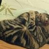 猫の鼻腔内リンパ腫㉟  部屋にマーキングしたのは誰??