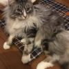 【ペットの寒さ対策におすすめ】電気いらずのぬくぬくマットにネコ大満足!