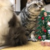 メリークリスマス!イブ♡ ニャンコとクリスマス!