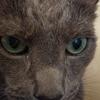 猫の後脚の筋力低下によるフラつき問題~アデホス服用2か月目にしてかなりの効果が現れてきました。