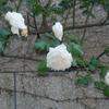 2012/05/25 新雪