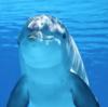 「イルカ」と「シャチ」の違い